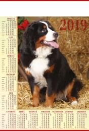 kalendarz plakatowy b-1 2019, p18 - pies 2019